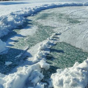 Evergreen Ice Shield
